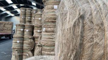 Des rouleaux de lin dans une usine de teillage.